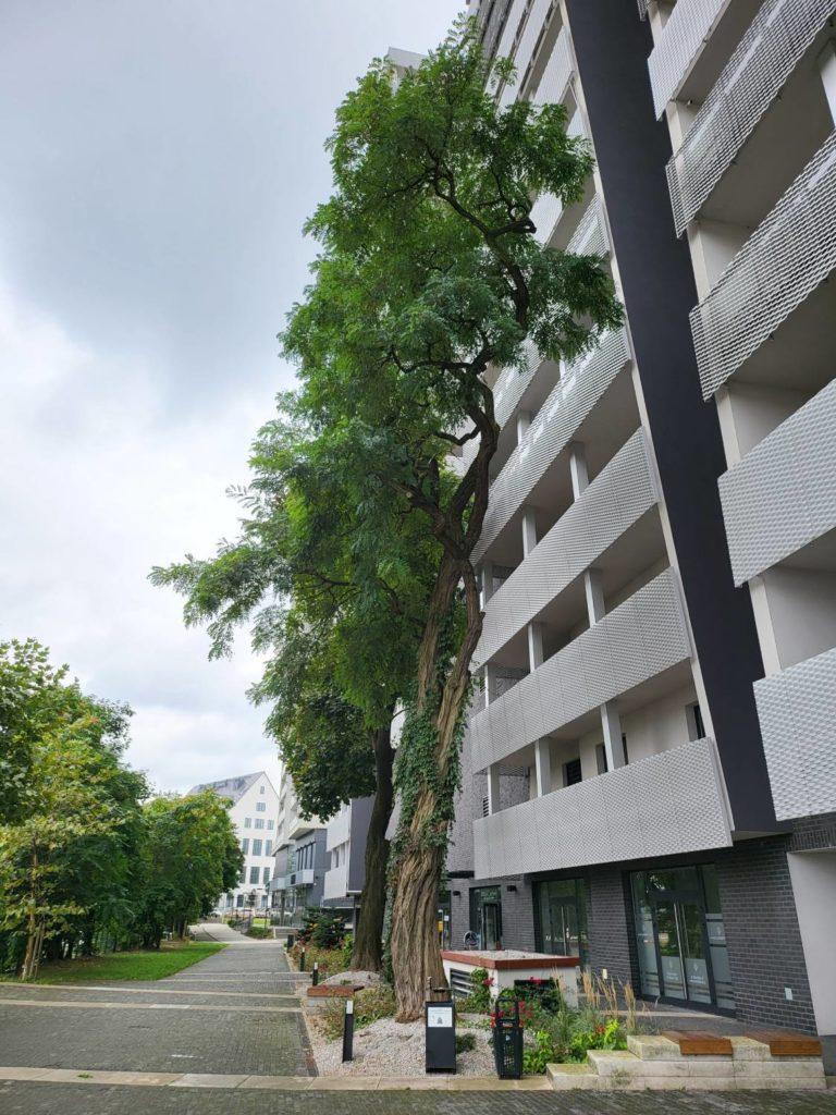 Galaxy Z Fold 3 główny drzewo i budynek
