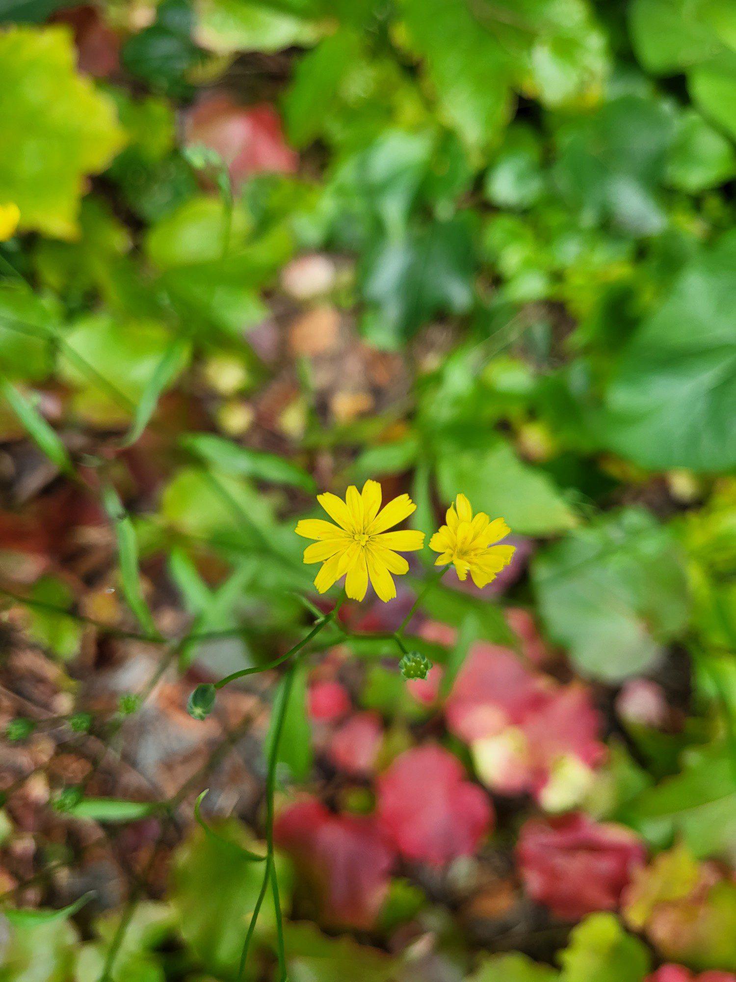kwiat zdjęcie