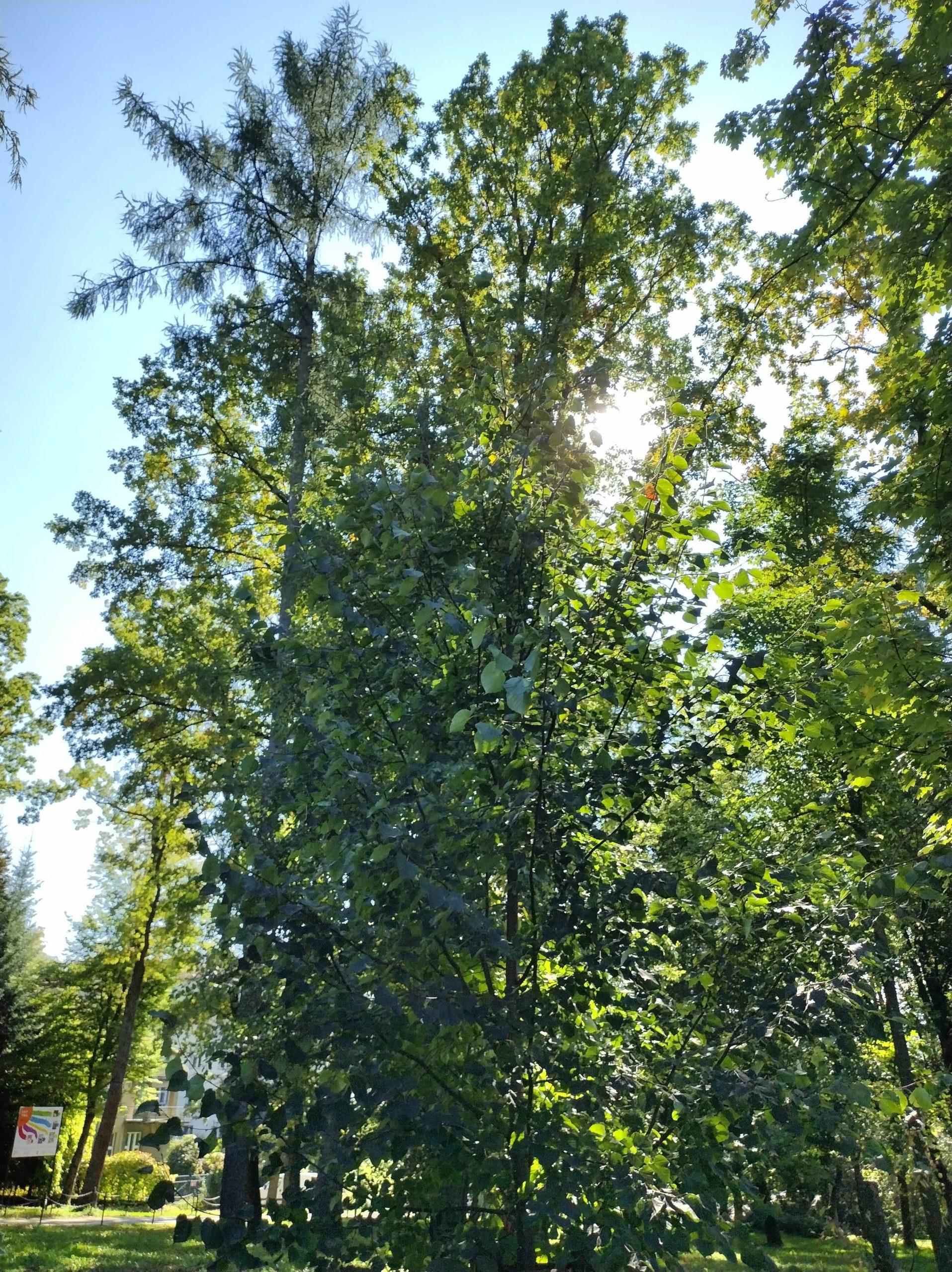 Moto G50 słońce zza drzew