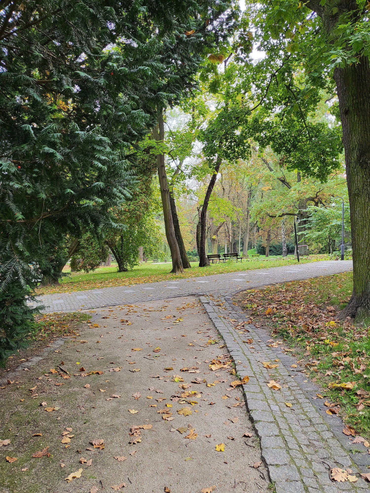 zdjęcie parku aparatem samsunga
