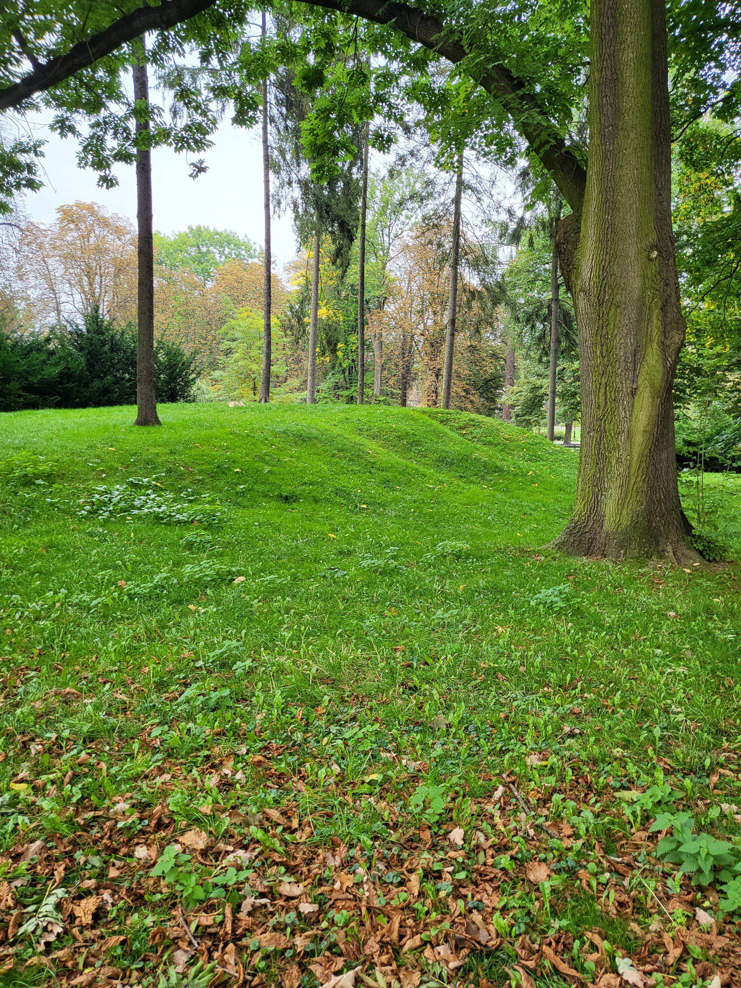 park zdjęcie