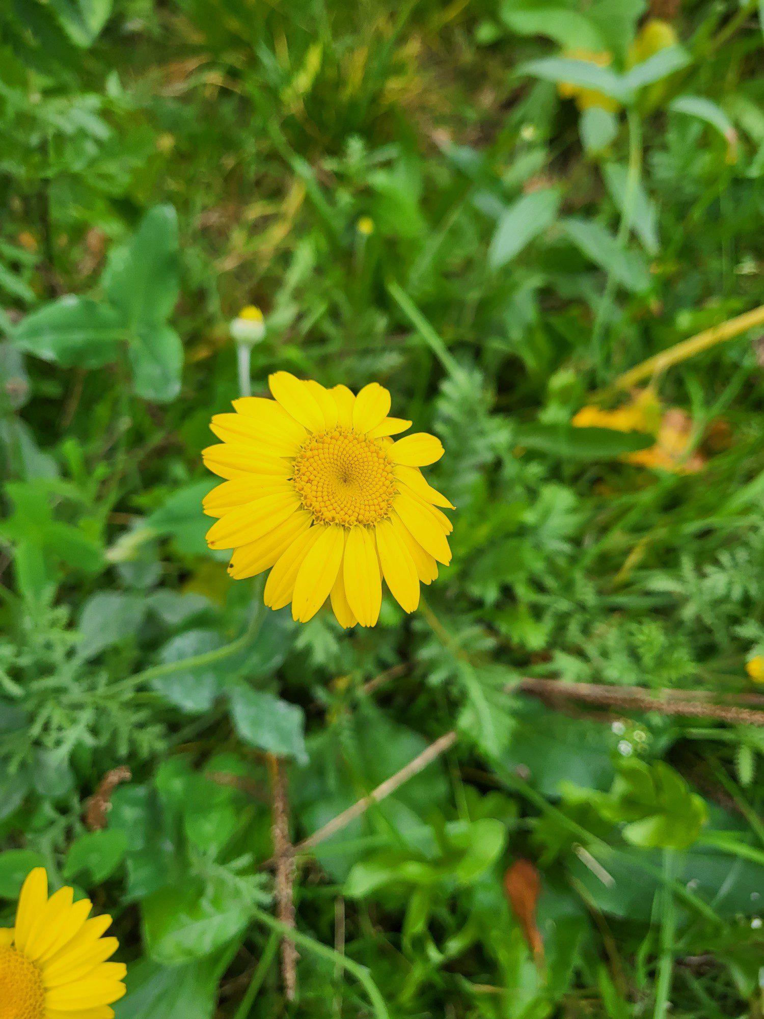 zółty kwiat apartem samsung galaxy z flip 3