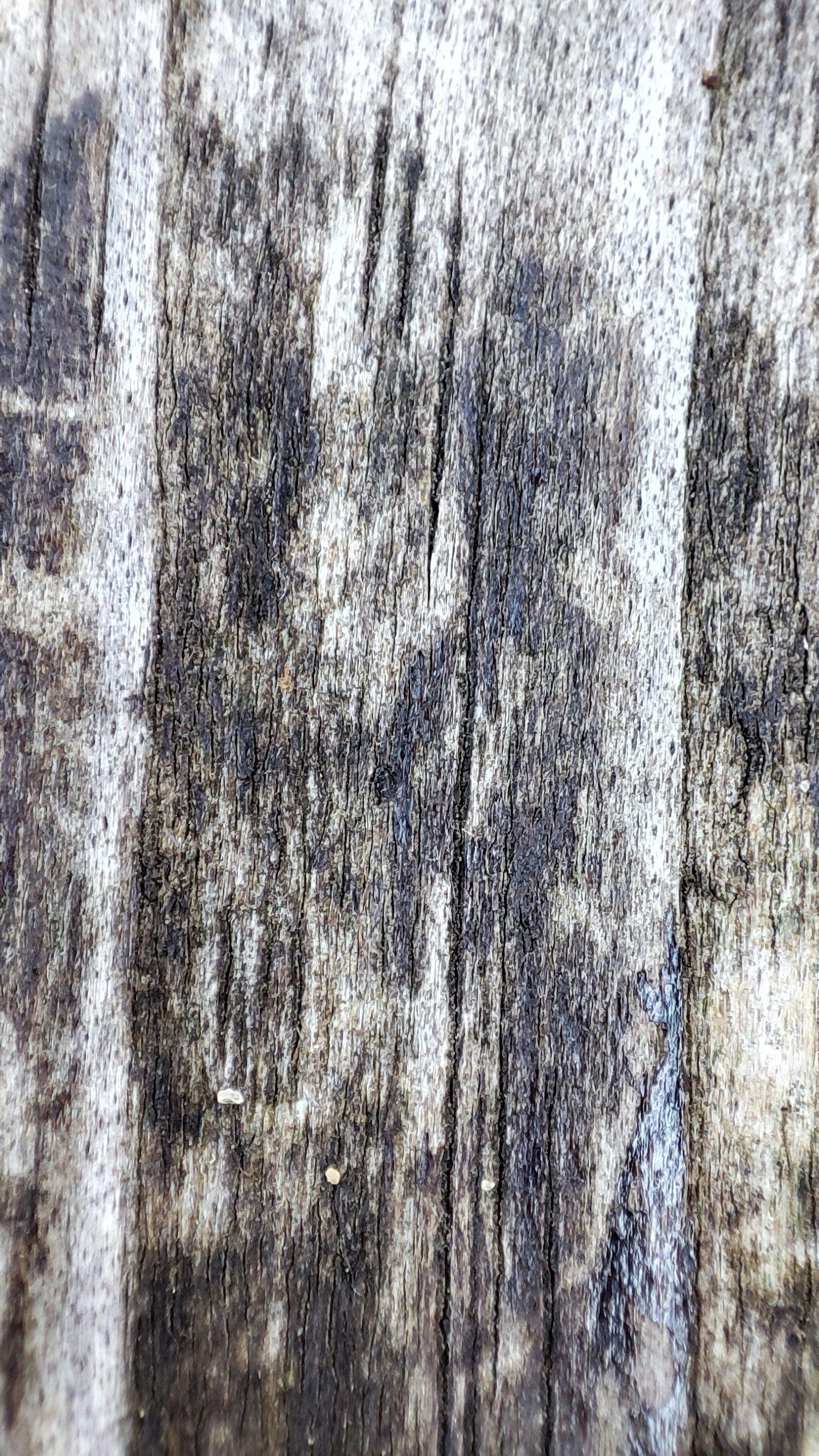 xiaomi 11t pro makro drewno