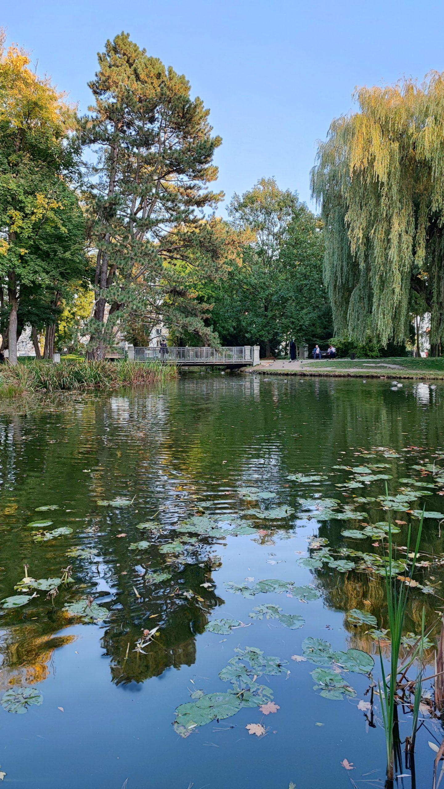 xiaomi 11t pro zdjęcie w parku